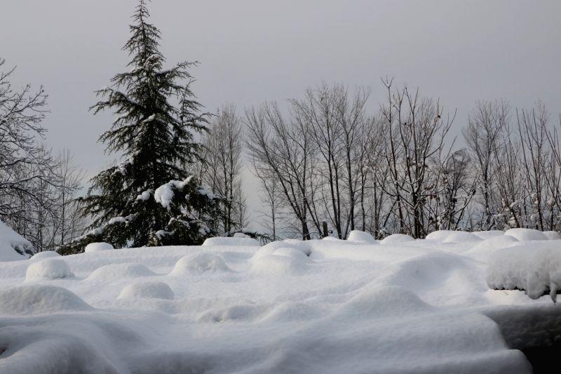 Srinagar: Srinagar receives heavy snowfall, on Feb 8, 2019.