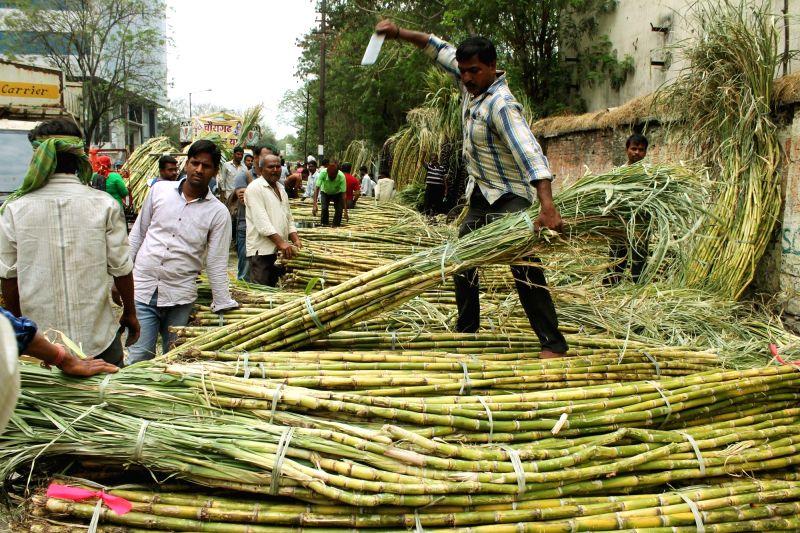 Sugarcane. (Image Source: IANS)