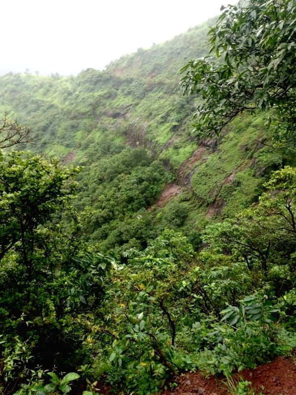 The deep ravine near Poladpur, around 175 km from Mumbai, where a private bus on a picnic trip plunged into, killing at least 32 university staffers, in Maharashtra's Raigad on July 28, 2018.