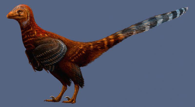 The three-foot fossilised skeleton, named as Jianianhualong tengi, is a troodontidae -- family of bird-like theropod dinosaurs. (Credit: Julius T. Csotonyi)