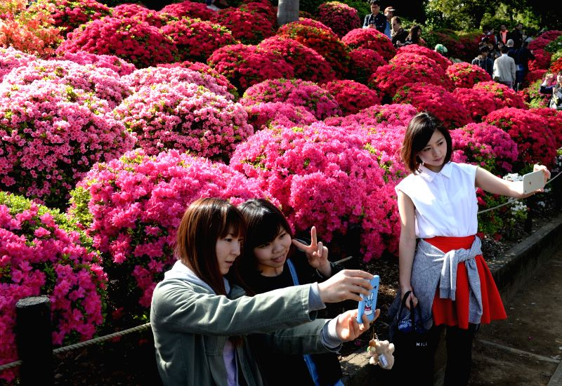 Visitors take pictures with Rhododendron flowers at the Nedu Jinja in Tokyo, Japan, April 18, 2015. Around 1000 species of rhododendron are in blossom here. ...