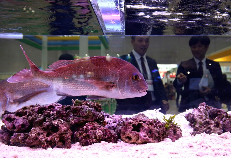A red sea bream is displayed during the 2015 Japan Pet Fair in Tokyo, Japan, April 2, 2015.