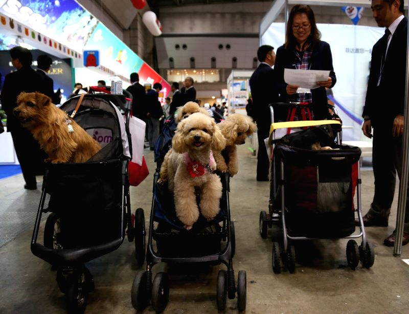 Dogs sit in trolleys during the 2015 Japan Pet Fair in Tokyo, Japan, April 2, 2015. The fair will be opened to public for  two days from April 4.  ...