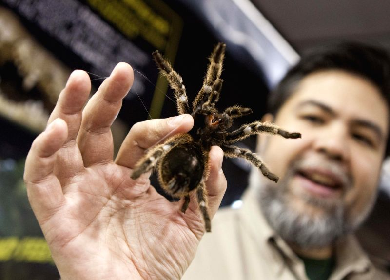A man shows a spide during the 2014 All About Pets Show in Toronto, Canada, April 18, 2014. Featuring everything from cats and dogs, to horses, fish, and even ...