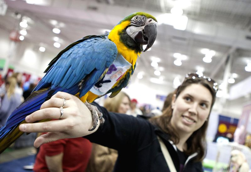 A woman poses for photos with a parrot during the 2014 All About Pets Show in Toronto, Canada, April 18, 2014. Featuring everything from cats and dogs, to horses, .
