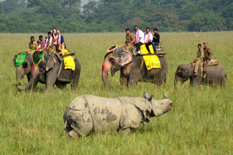 Tourists take a ride on elephants to watch a rhinoceros at the Indian Pobitora Wildlife Sanctuary in the Morigaon district of the Assam, on Oct 31, 2015.