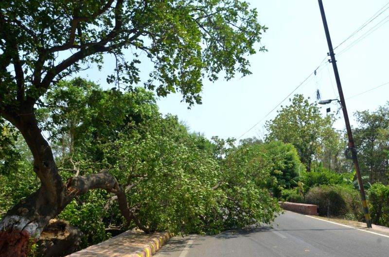 Trees uprooted after heavy storm and rainfall that lashed Lucknow on May 21, 2016.