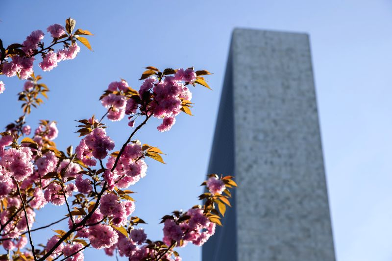 UNITED NATIONS, April 20, 2017 - Cherry blossoms are seen on the tree at the United Nations Headquarters in New York, April 20, 2017.