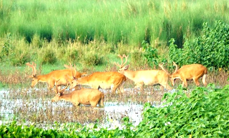 UP's wild west discovers nature's paradise; rare sighting of endangered swamp deer.