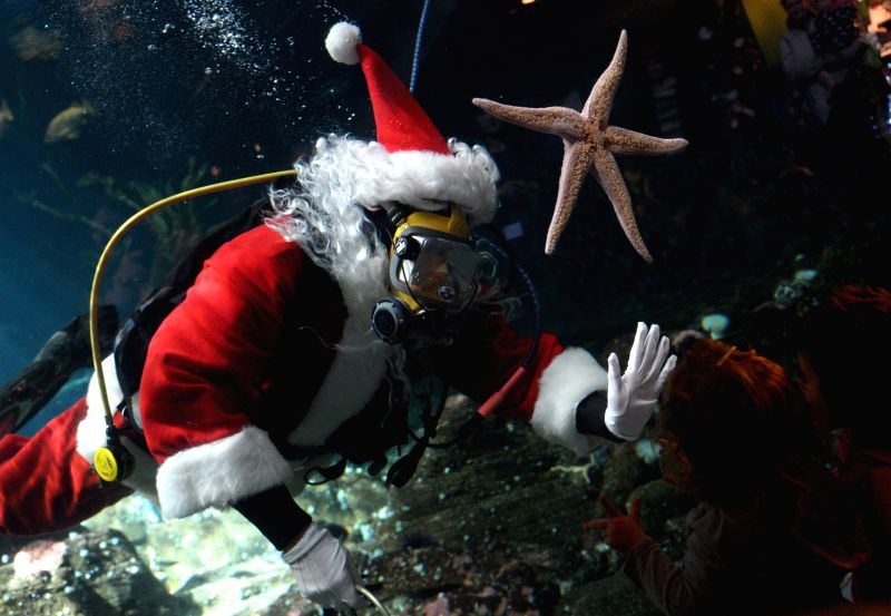 Vancouver (Canada): Scuba diving Santa Claus swims in the Strait of Georgia tank at the Vancouver Aquarium, to mark the beginning of Christmas season entertainment offered by the Aquarium to its ...