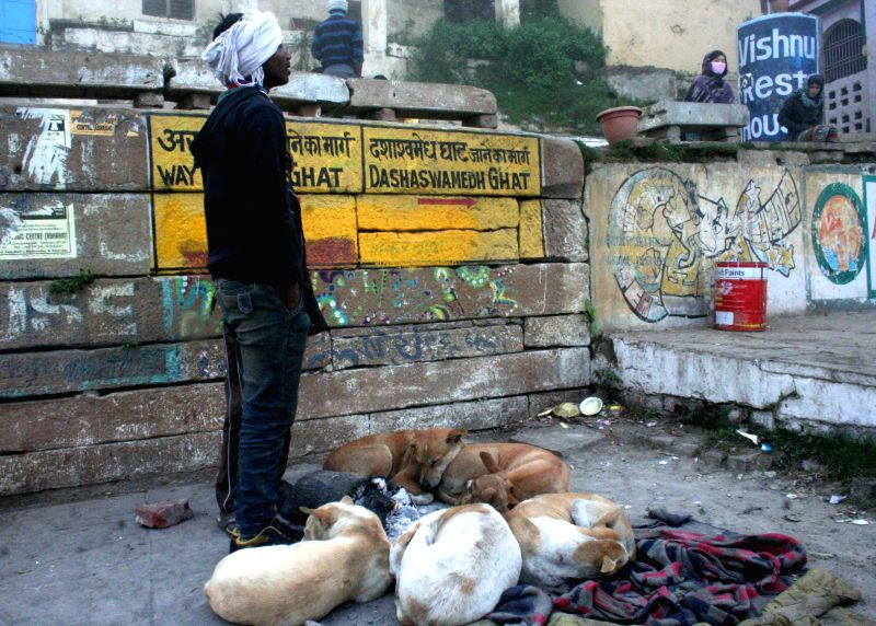 A pack of dogs curl-up near ashes of burnt wood to keep themselves warm on a chilly morning in Varanasi on Jan 16, 2015.