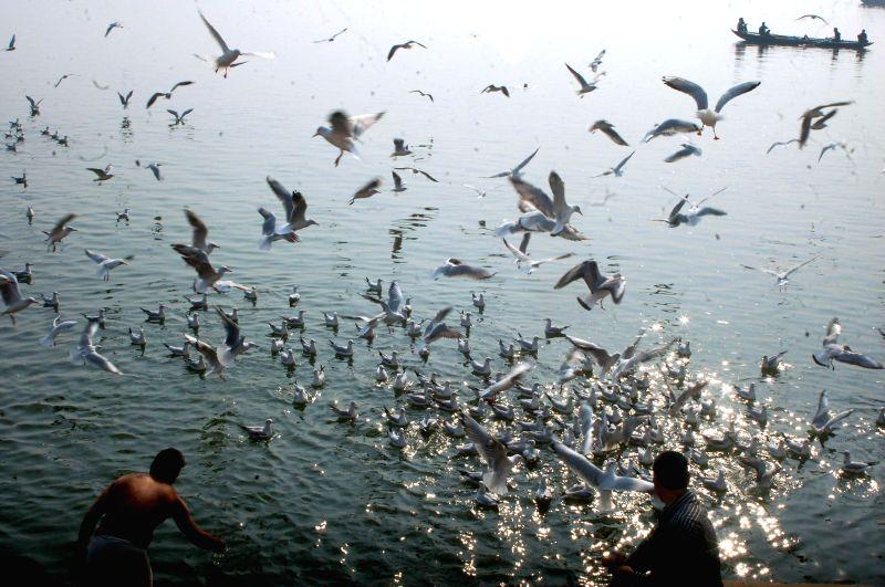 Migratory birds from Siberia fly above the Ganga river in Varanasi on Nov. 20, 2014.