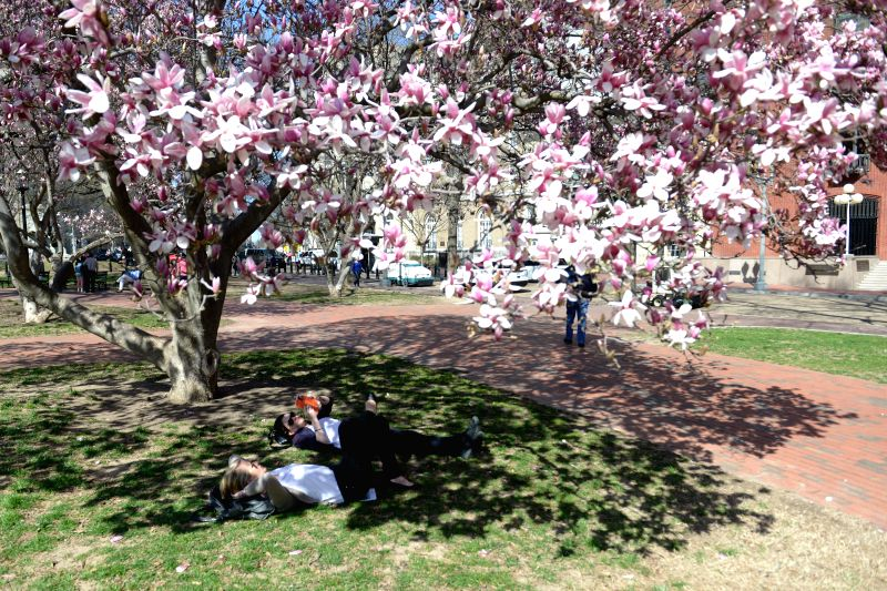 Two girls rest under flowering Magnolia in Washington D.C., the United States, April 6, 2015.