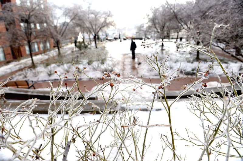 Ice covered branches are seen in Arlington, Virginia, near Washington D.C., the United States, on March. 2, 2015. The federal government opened two-hour ...