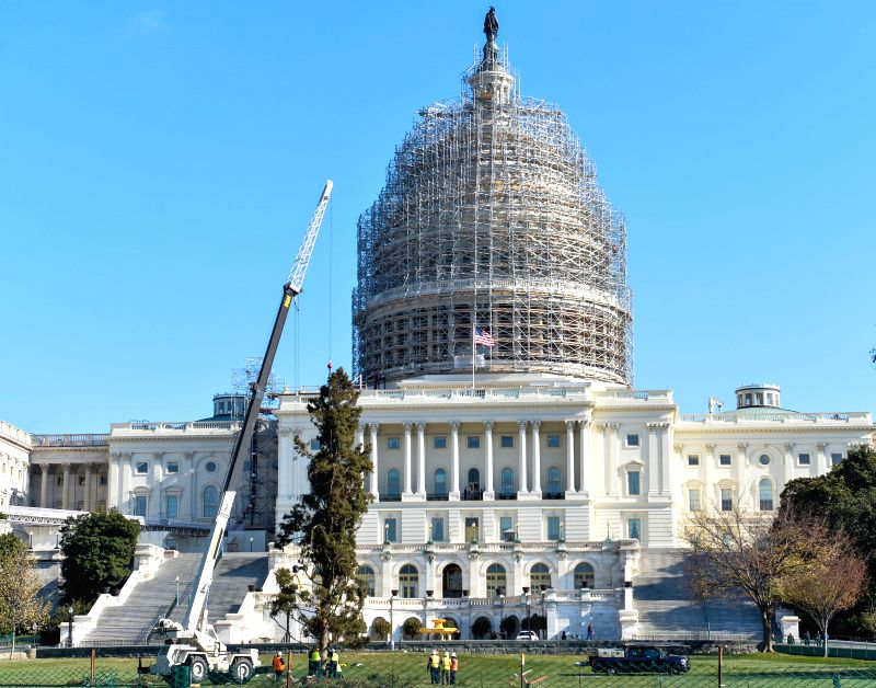 Washington D.C: The 2014 Capitol Christmas Tree is seen planted into the west lawn of the U.S. Capitol in Washington D.C., on Nov. 21, 2014. The 2014 Capitol Christmas Tree is a white spruce from the