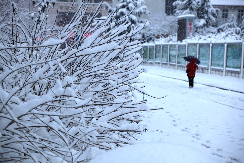 Weihai (China): A woman walks in snow in Weihai City, east China's Shandong Province, Dec. 5, 2014. A snowfall hit the coastal city in recent days.
