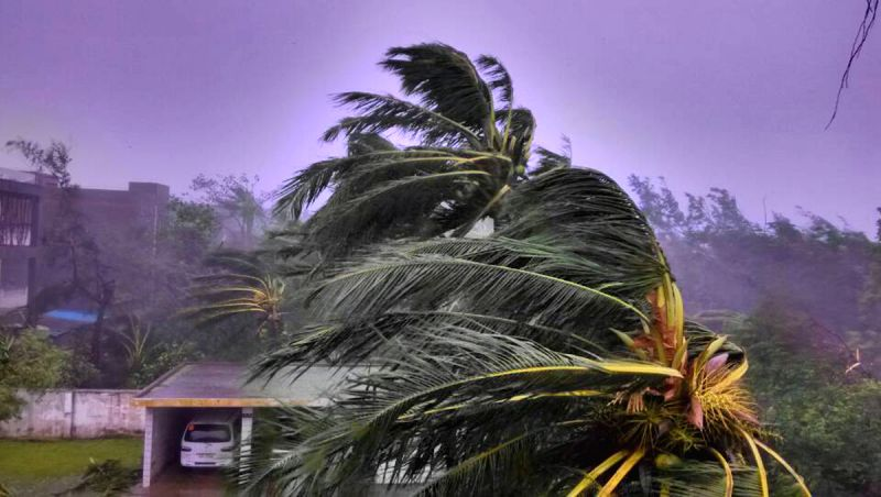 Strong winds blow trees in Wenchang, south China's island of Hainan Province, July 18, 2014. A man was killed when super typhoon Rammasun made landfall in Wenchang