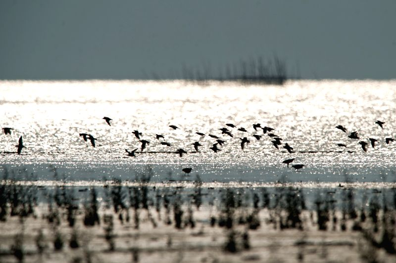 Shorebirds fly on the Bahagia beach during return migration session to Siberia at Muara Gembong, West Java province in Indonesia, May 10, 2014. The World Migratory