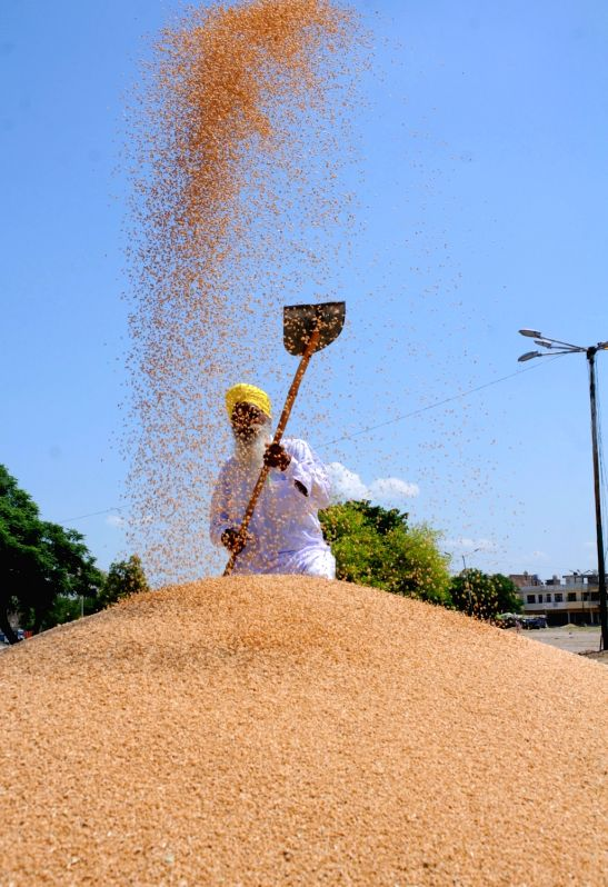 Wheat procurement at all time high, paddy procurement on.