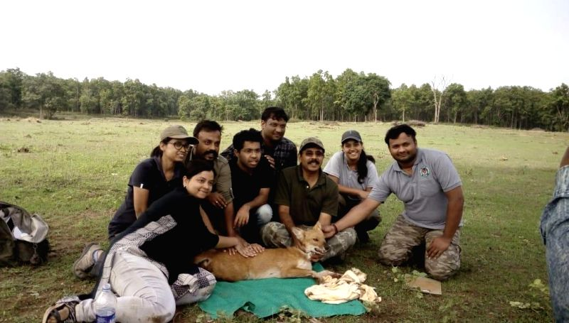 Wildlife Institute of India (WII) delegation collared a Dhole with a satellite transmitter at Kanha National Park, in Bhopal, on July 19, 2018.