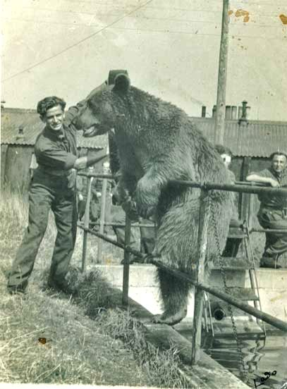 Wojtek the Bear in Scotland with his Polish colleagues after the war