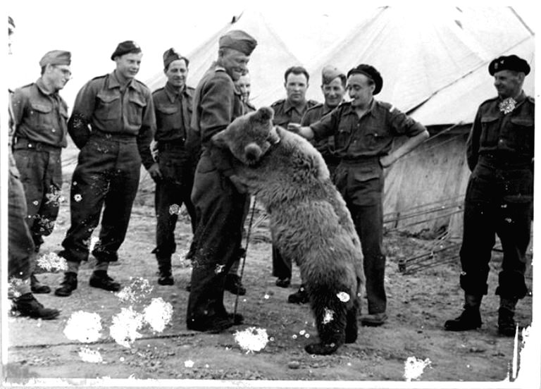 Wojtek the Bear with his Polish \'colleagues\' in the Middle East during World War II