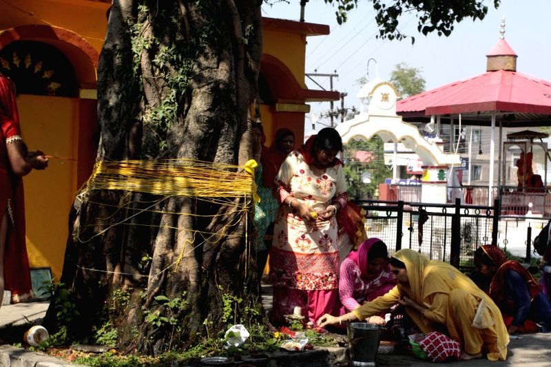 Women worship a banyan tree on Vat Purnima in Dharamsala on May 25, 2017.