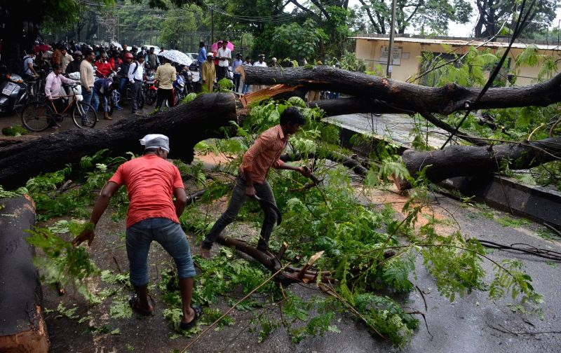 Workers busy cutting tress that fell on roads during heavy rains in  Bengaluru on July 29, 2016.