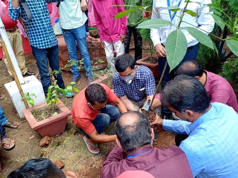 World's first genetically modified rubber plant planted in Assam
