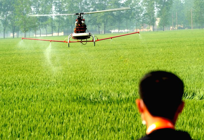 An unmanned aerial vehicle (UAV) sprays pesticide on a wheat field in Woyang County, east China's Anhui Province, April 23, 2014. The use of UAV promoted the ...