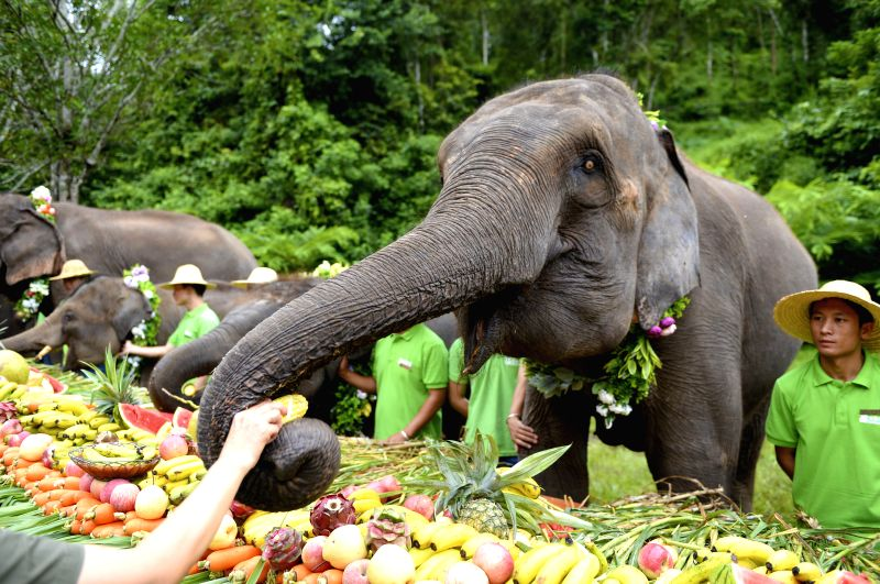 XISHUANGBANNA, Aug. 12, 2018 - Elephants enjoy a special fruit feast at the Wild Elephant Valley scenic spot in Xishuangbanna, southwest China's Yunnan Province, Aug. 12, 2018, the World Elephant ...
