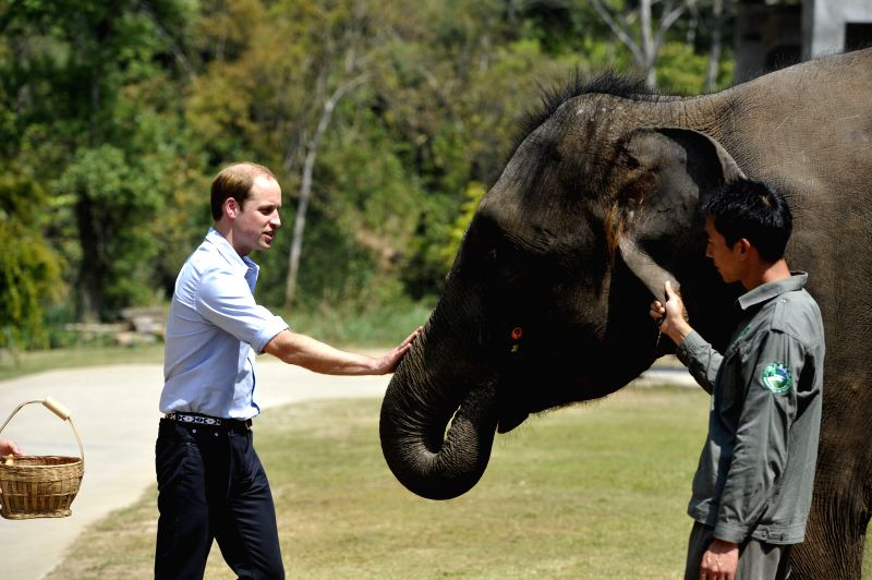 Britain's Prince William visits the Asian Elephant Protection and Breeding Base in Xishuangbanna Dai Autonomous Region, southwest China's Yunnan Province, ...
