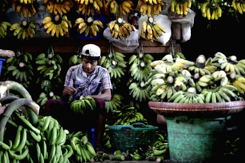 A man works at a bananas selling shop in Yangon, Myanmar, Jan. 23, 2015. Myanmar has permitted 20 foreign and local enterprises to invest in the country this month ..