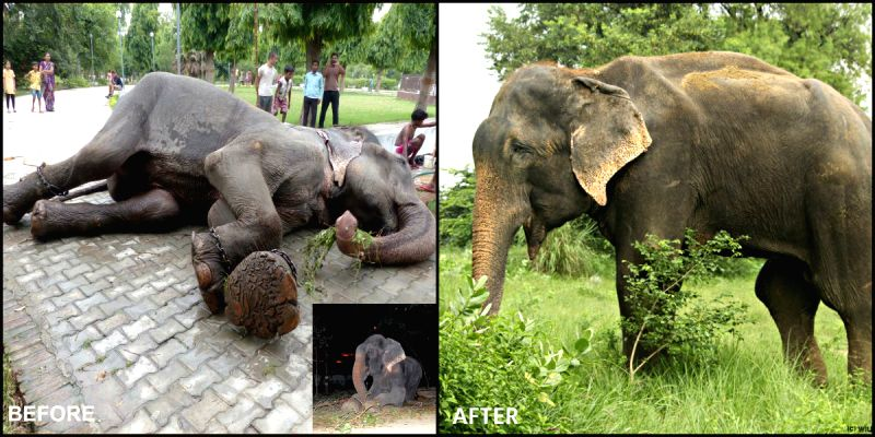 Years of brutality has made elephant the most exploited animal and a threatened species