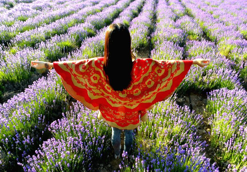 A visitor poses for photo in lavender fields in Yining County under Kazak Autonomous Prefecture of Ili, northwest China's Xinjiang Uygur Autonomous Region, June 22, .