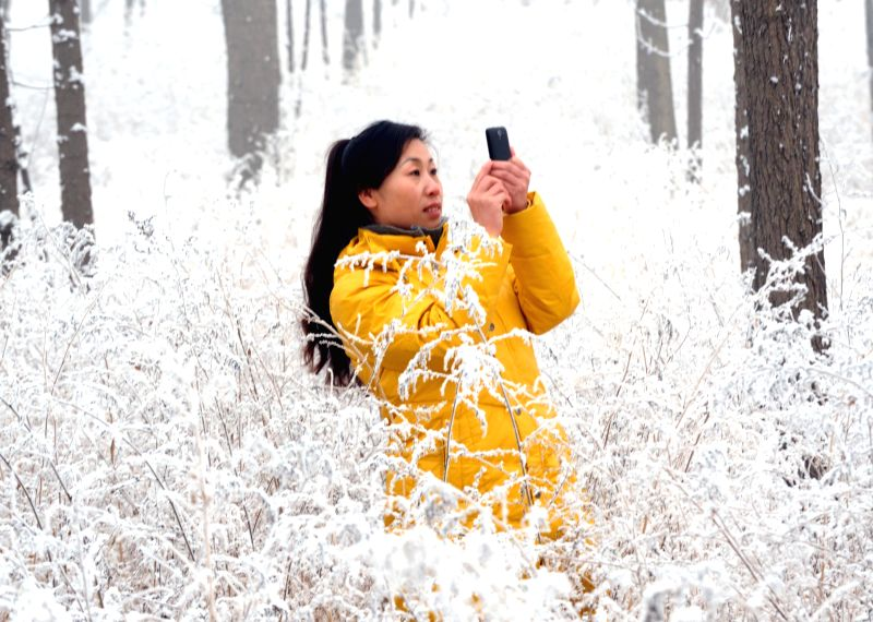 A woman takes photos of the snow scenery in Yongqing County of Langfang, north China's Hebei Province, Jan. 15, 2015. Langfang saw its first snowfall in 2015 on ...