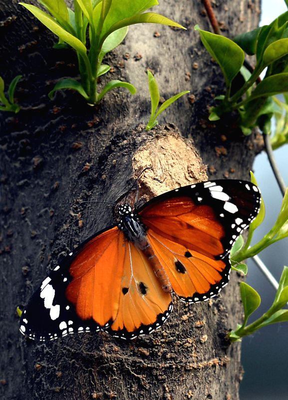 A butterfly rests on a tree during the 32nd Luoyang Peony Culture Festival in Luoyang, central China's Henan Province, April 13, 2014.  ...