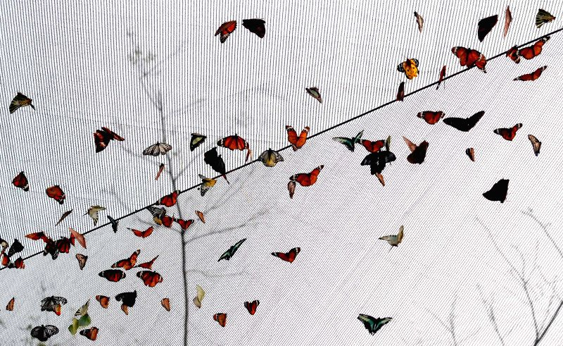 Photo taken on April 13, 2014 shows various species of butterflies in the butterfly house during the 32nd Luoyang Peony Culture Festival in Luoyang, central ...