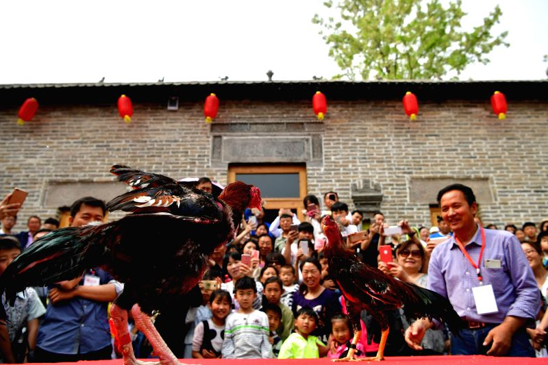 ZHENGZHOU, May 1, 2017 - Tourists watch cockfight in Sangyuan Village of Hebi City, central China's Henan Province, May 1, 2017. Rural tourism maintained robust growth in China last year as more ...