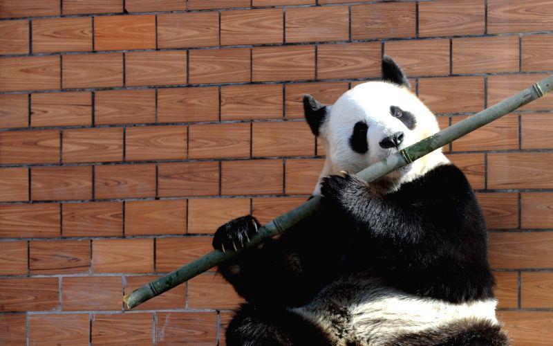 Gotta love Pandas