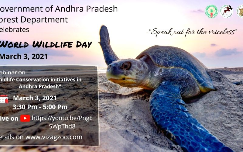 Wildlife Day webinar to focus on whale sharks