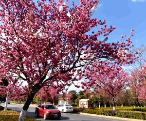 CHINA YUNNAN KUNMING WINTER CHERRY