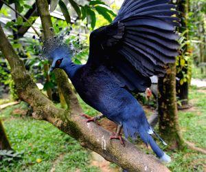 SINGAPORE-JURONG BIRD PARK-LATEST AVIARY-OPENING CEREMONY