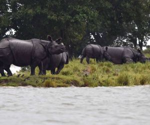 Flood hits Kaziranga National Park