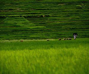 NEPAL LALITPUR KHOKANA AGRICULTURE