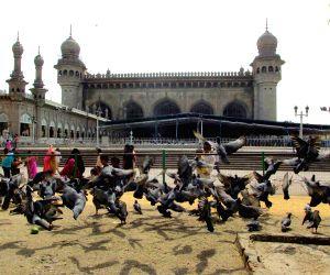 Pigeons At Mecca Masjid