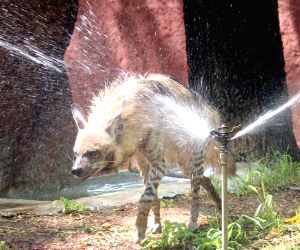Nehru Zoological Park - Hyena