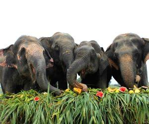 Elephant Appreciation Day - jumbo buffet
