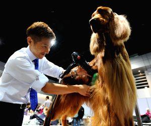 THAILAND BANGKOK DOG SHOW