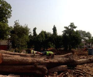 Chipko' movement in Delhi to save over 16,000 trees